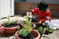 2011庭づくりスタート。