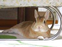 ウサギと人との間には・・・