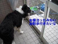 窓の外は雨♪雨がふってる/雨の物語