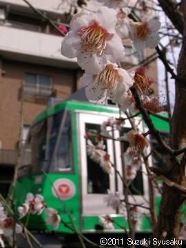 宮の森日記【出張編】●2/21(月)東京は春の気配