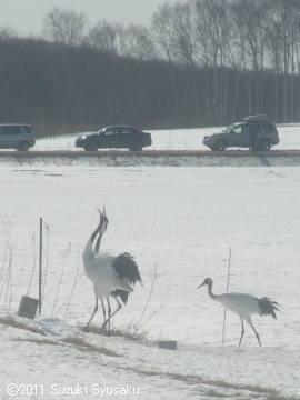 宮の森日記【出張編】●2/28(月)丹頂&SL冬の湿原号