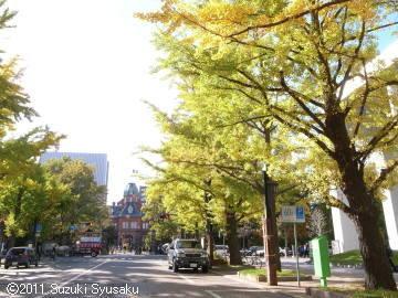 宮の森日記●道庁の紅葉