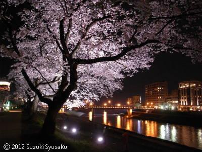 宮の森日記【出張編】●4/13(金)桜の福井