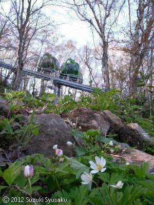 宮の森日記●再び藻岩山
