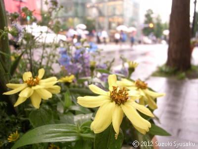 宮の森日記●雨