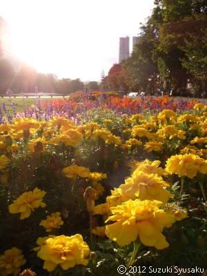 宮の森日記●大通公園