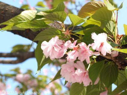 宮の森日記【出張編】●4/11(木)飛行機で東京へ