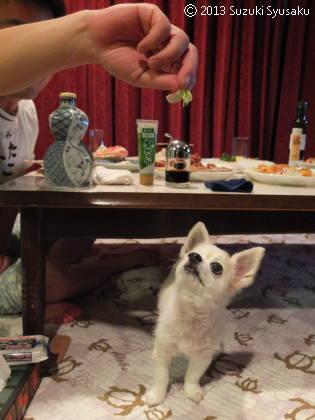 宮の森日記【出張編】●9/16(月)義妹夫婦と躾の悪いイヌ
