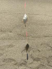 豊浦町で鰈by投げ釣り
