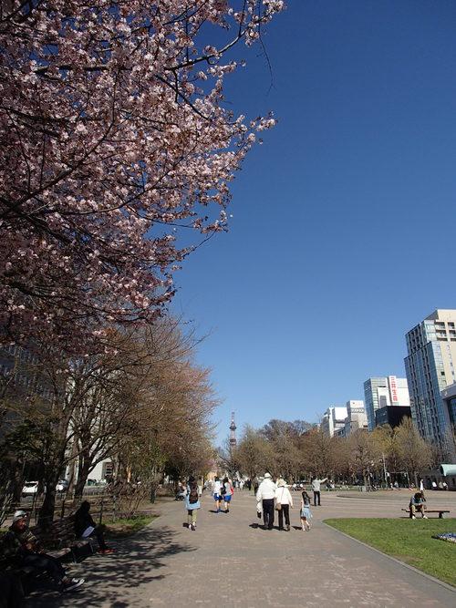 札幌の桜2014(大通公園編)