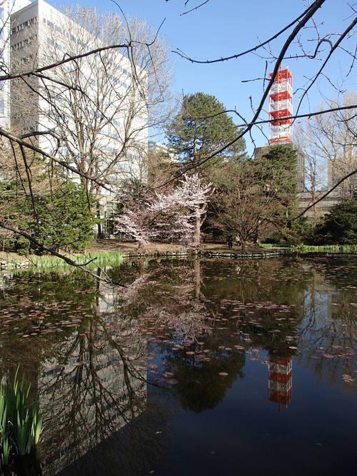 札幌の桜2014(道庁赤レンガ編)