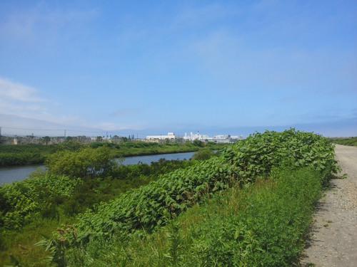 新川河口散策